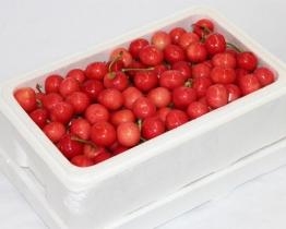 樱桃泡沫箱